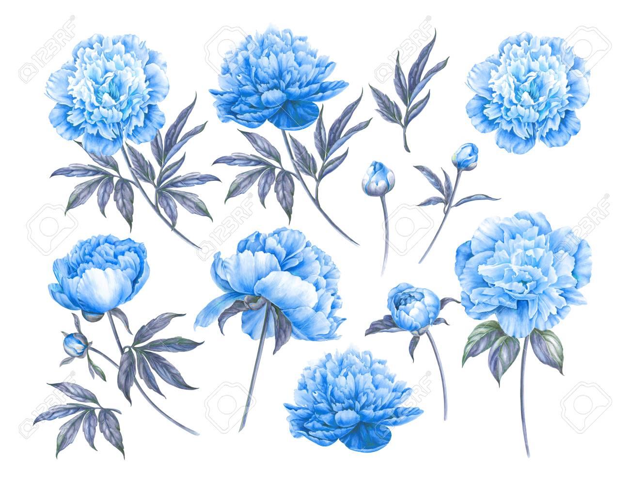 Conjunto De Elementos Florales Botánicos Diseño De Primavera O Verano Para Invitaciones Bodas O Tarjetas De Felicitación Conjunto De Flores Azules