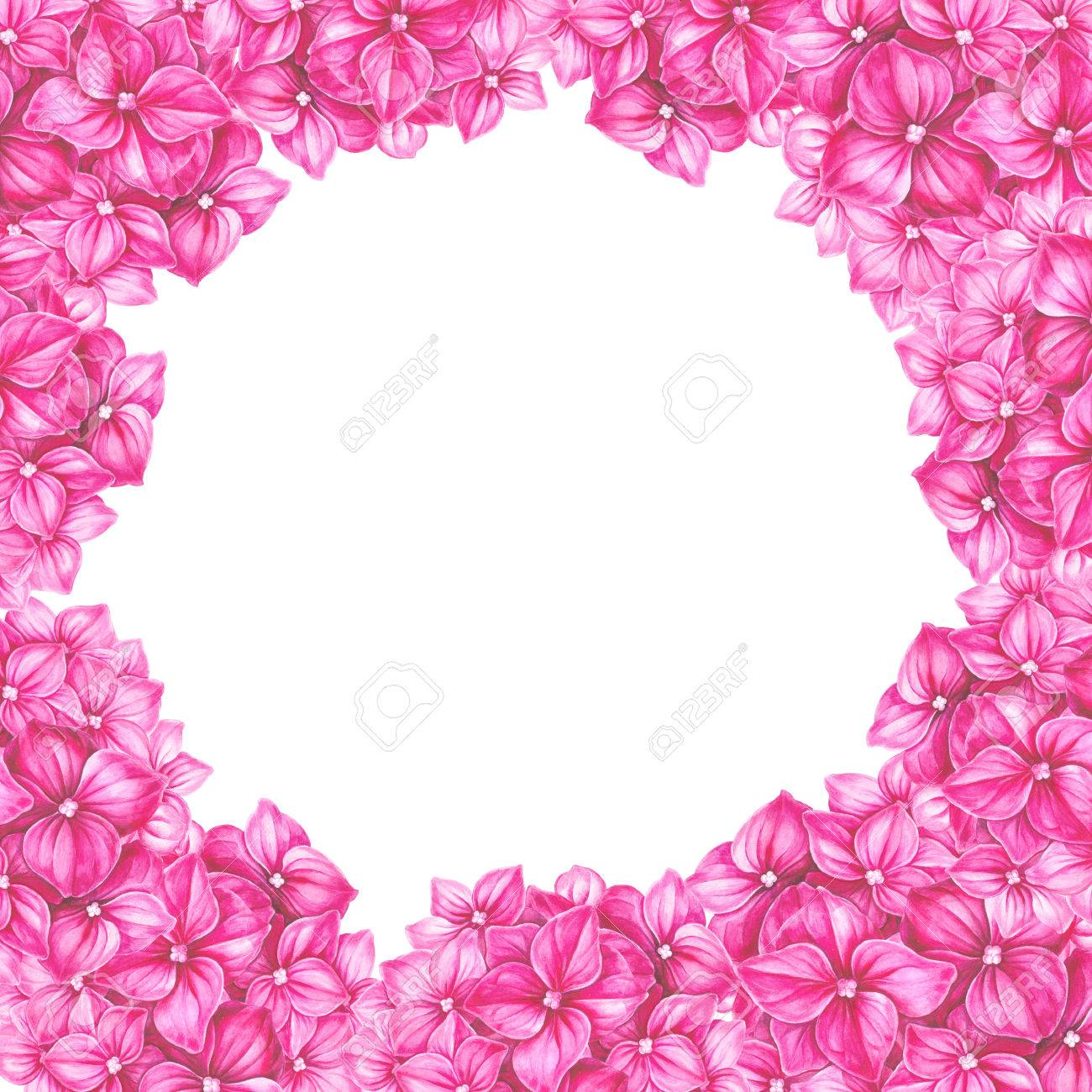 Blooming Hydrangea Flower Watercolor Illustration. Frame Of Pink ...