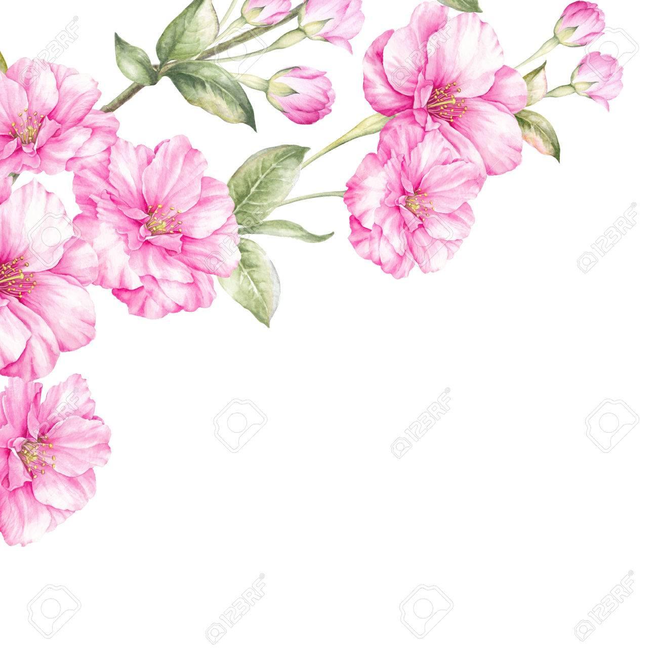 ピンクの桜の花支店ホワイト バック グラウンドを分離しますリアルな