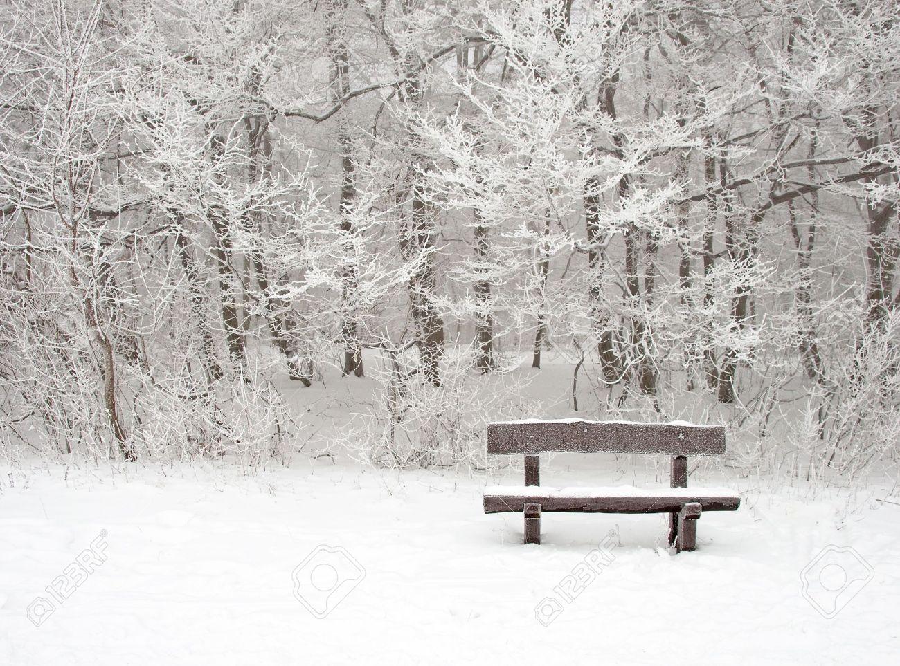 Nice winter scene with bench Stock Photo - 15467015