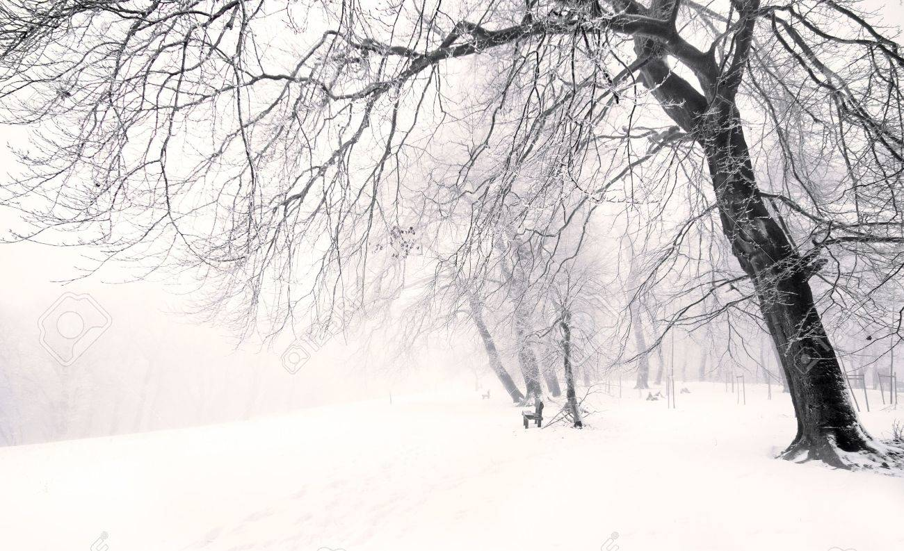 nice winter scene stock photo picture and royalty free image image 15467080 nice winter scene