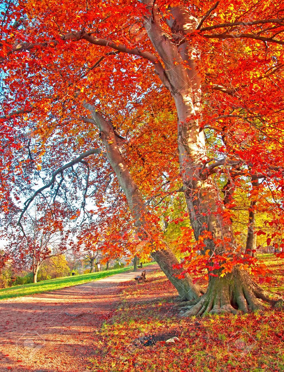 Schöne Herbstliche Szene Lizenzfreie Fotos, Bilder Und Stock ...