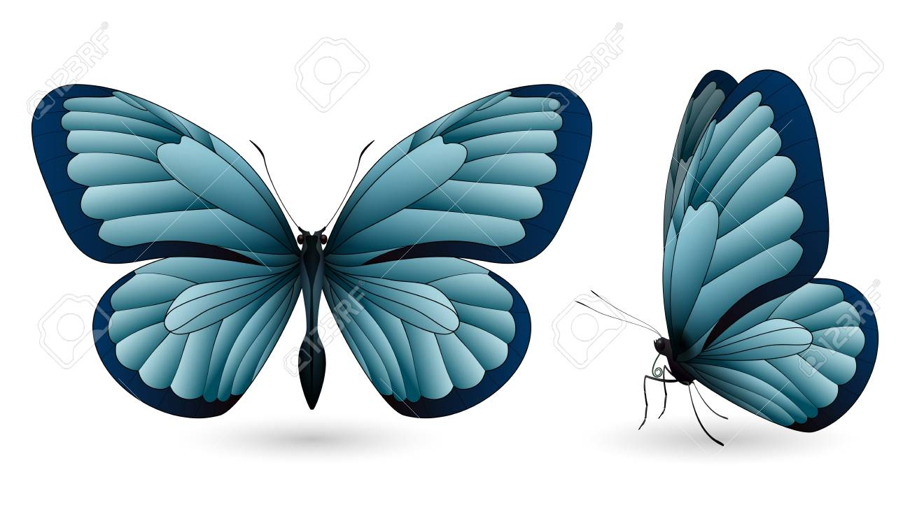 Set Of Colorful Butterflies. Front And Side View Royalty Free ...