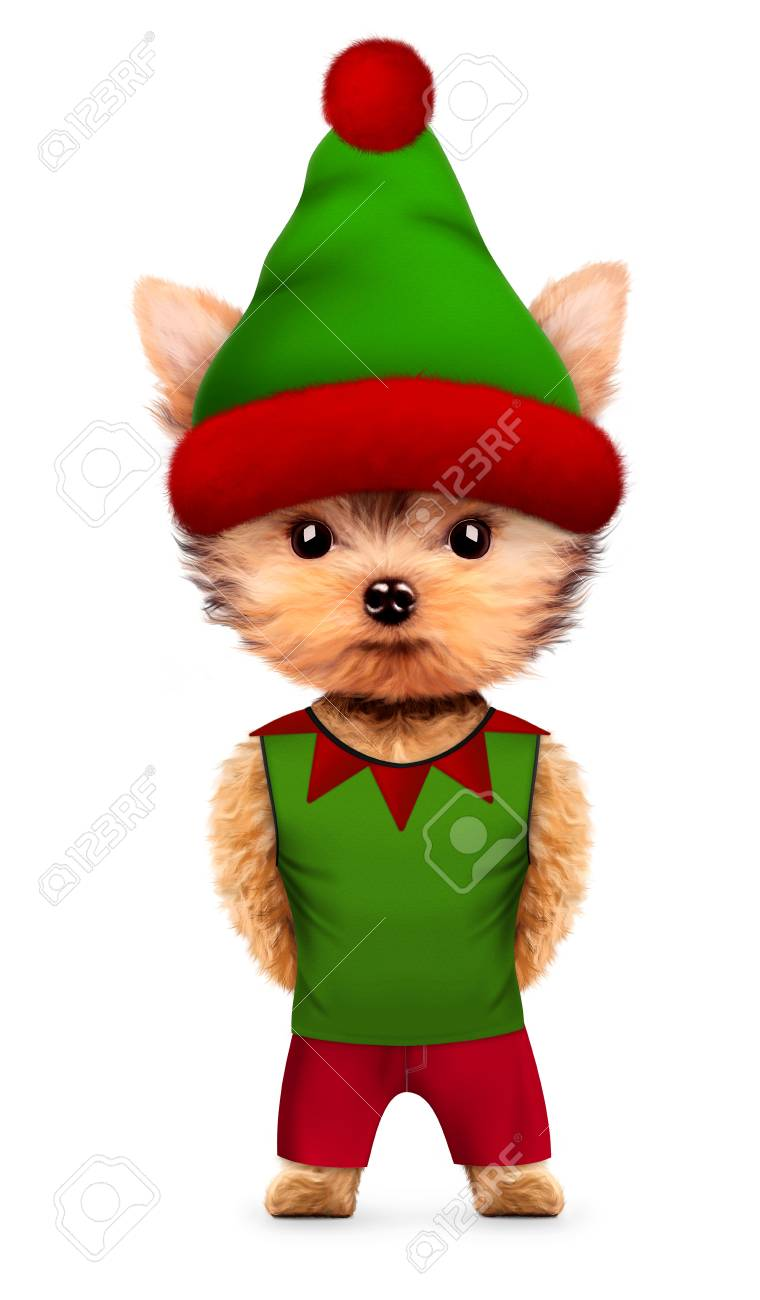 Funny Dog Santau0027s elf with hat and costume. New Year and Christmas concept. Realistic  sc 1 st  123RF.com & Funny Dog Santau0027s Elf With Hat And Costume. New Year And Christmas ...