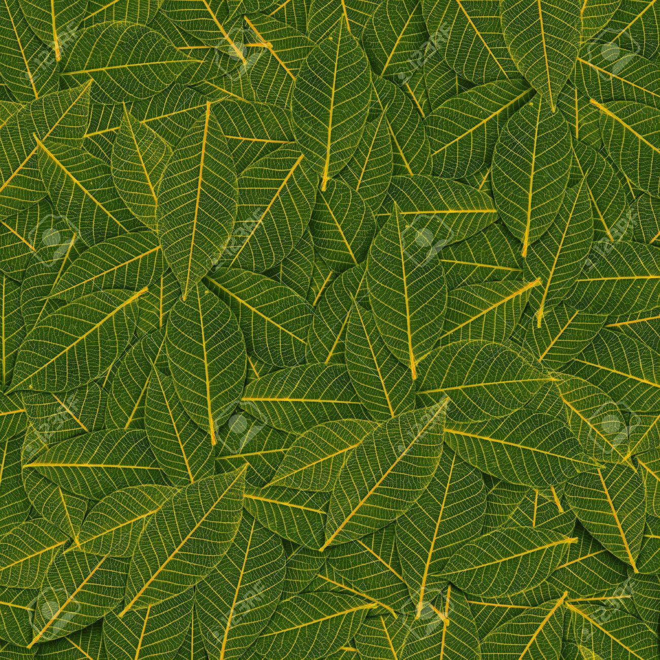 yellow green transparent leaf pattern Stock Photo - 16241122