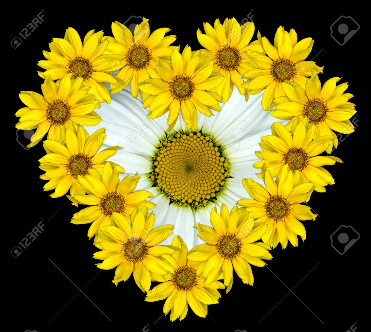 Heart of yellow flowers of decorative sunflowers helinthus and heart of yellow flowers of decorative sunflowers helinthus and white daisy flower inside isolated on black mightylinksfo