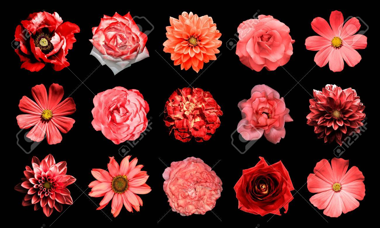 Mix collage of natural and surreal red flowers 15 in 1 dahlias mix collage of natural and surreal red flowers 15 in 1 dahlias primulas izmirmasajfo Image collections