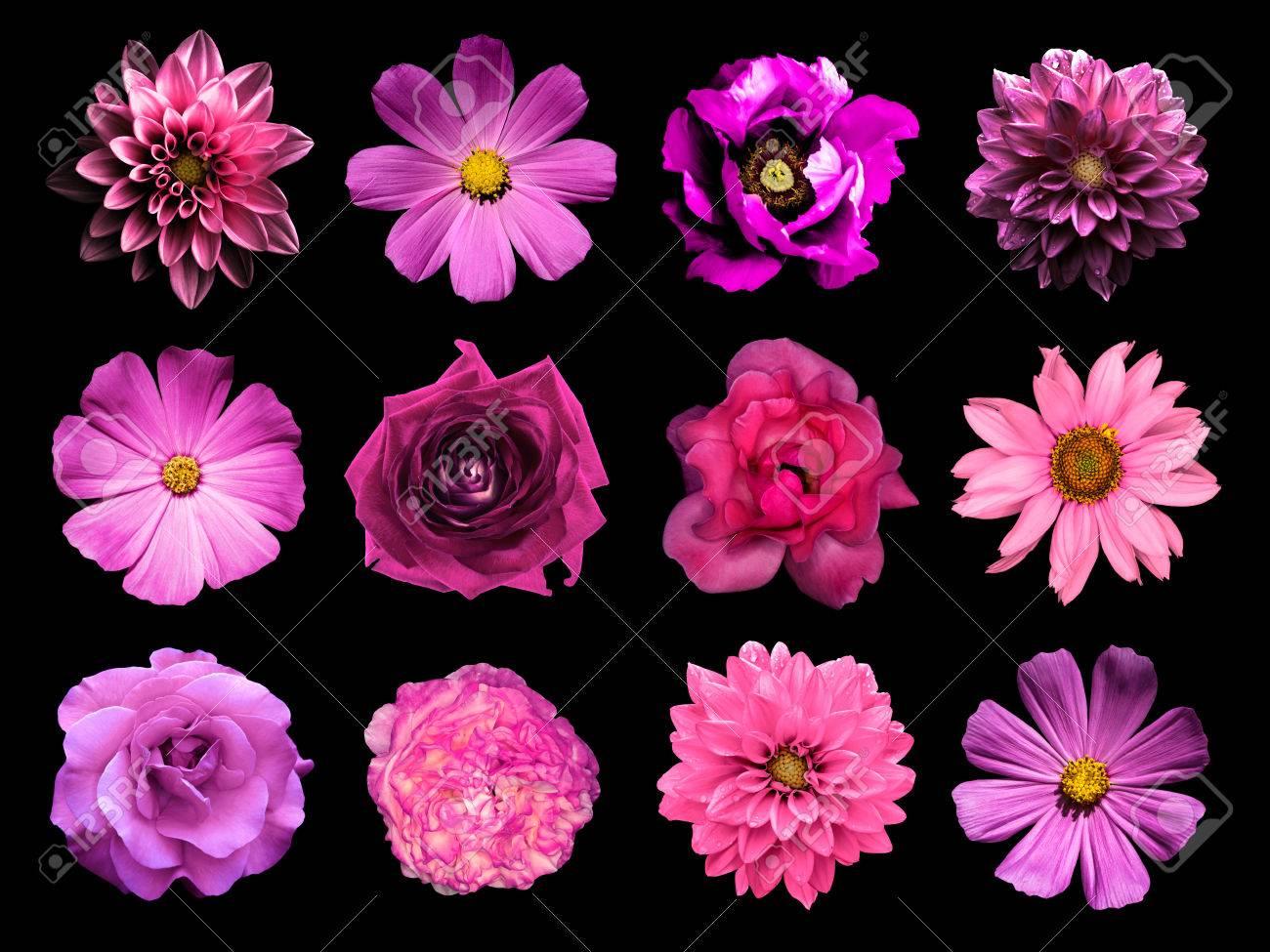 Mezclar Collage De Flores Naturales Y Surrealistas De Color Rosa 12
