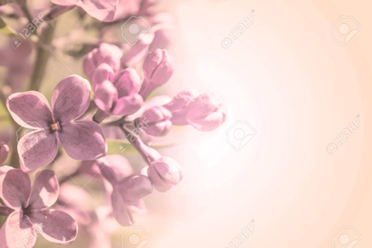 Doux Branche La Couleur Des Petales Avec Ressort Fleurs Rose Lilas