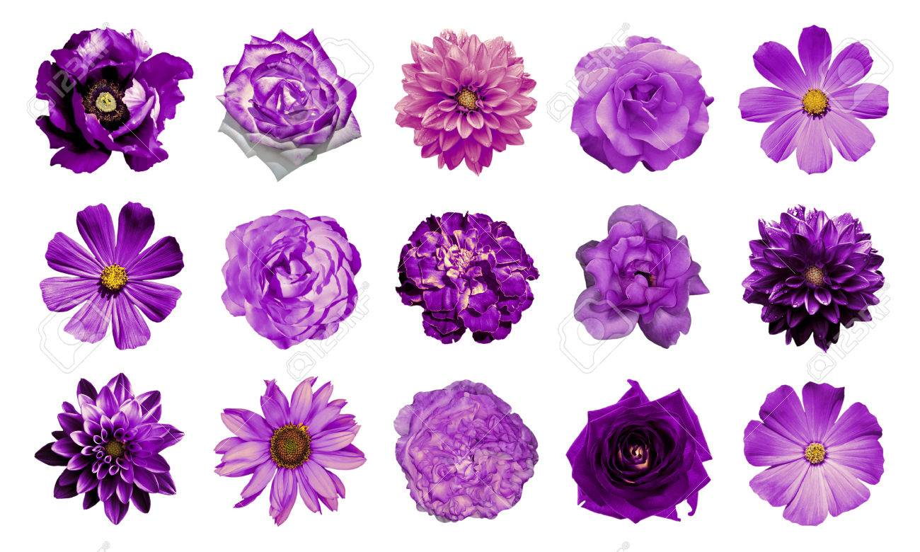 Mix collage of natural and surreal violet flowers 15 in 1 dahlias mix collage of natural and surreal violet flowers 15 in 1 dahlias primulas izmirmasajfo