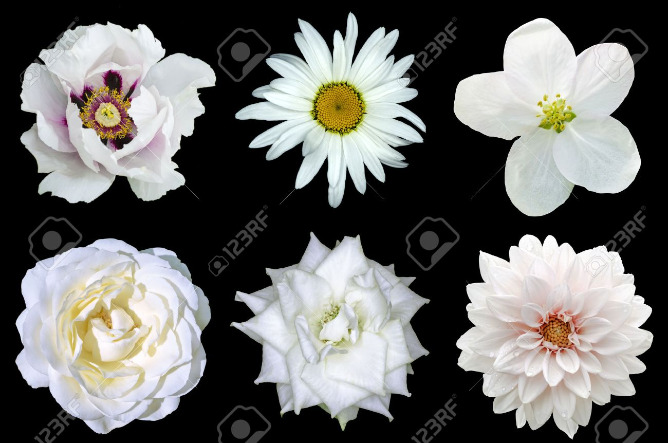Mezclar Collage De Flores Blancas Naturales 6 En 1 Peona Dalia