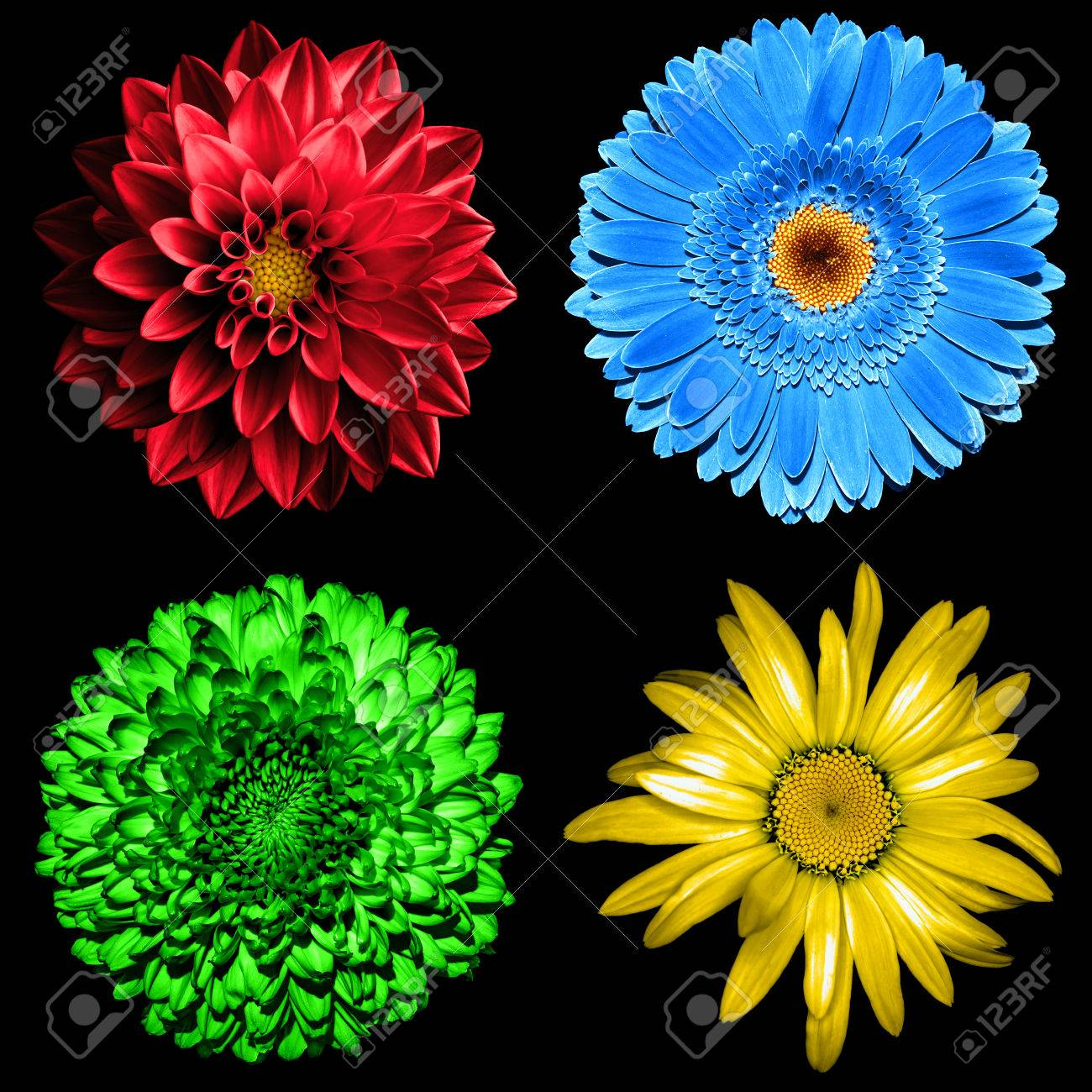 Ensemble De 4 A 1 Fleurs Surrealistes Chrysantheme Vert Gerbera