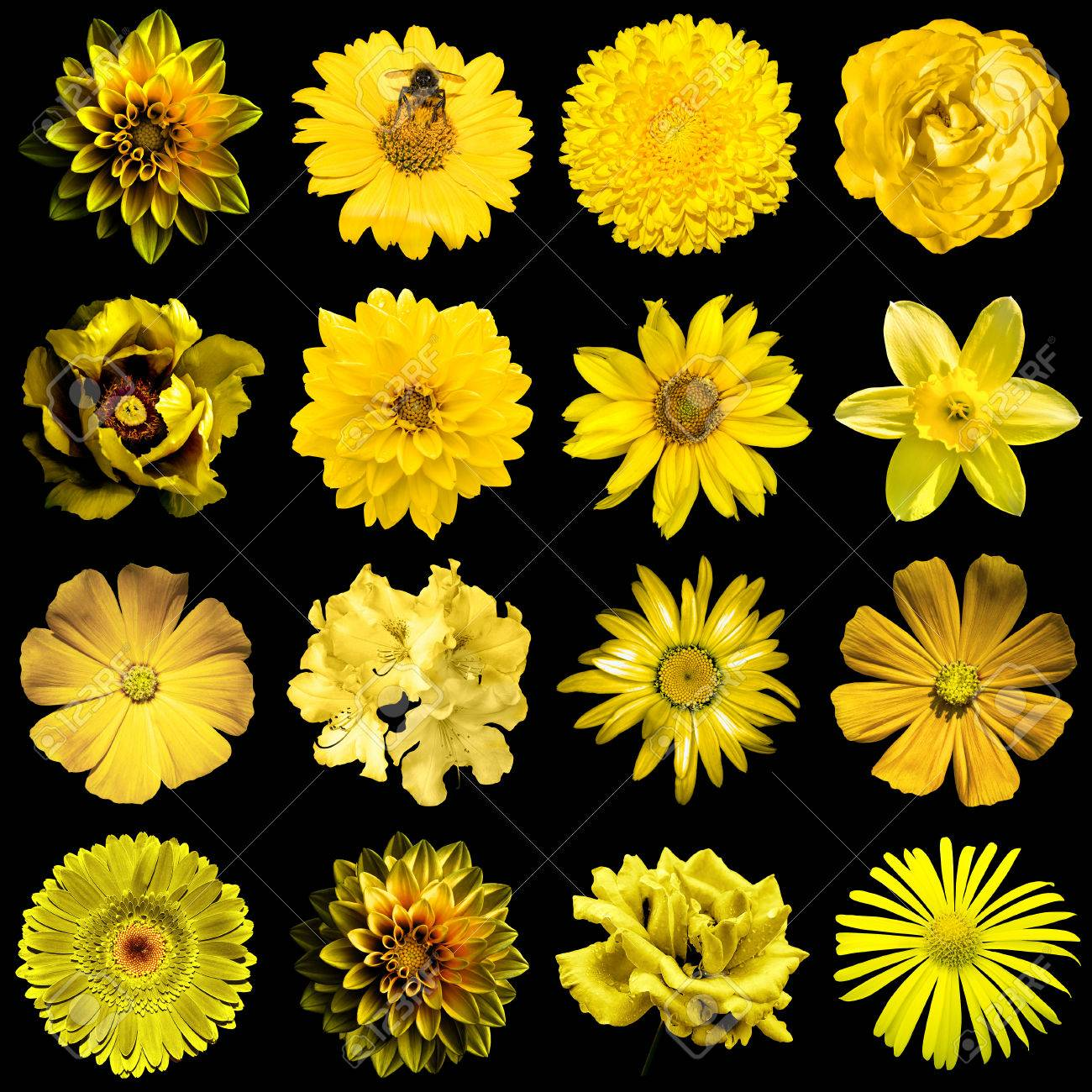 Mix collage of natural and surreal yellow gold flowers 16 in stock mix collage of natural and surreal yellow gold flowers 16 in 1 peony dahlia mightylinksfo