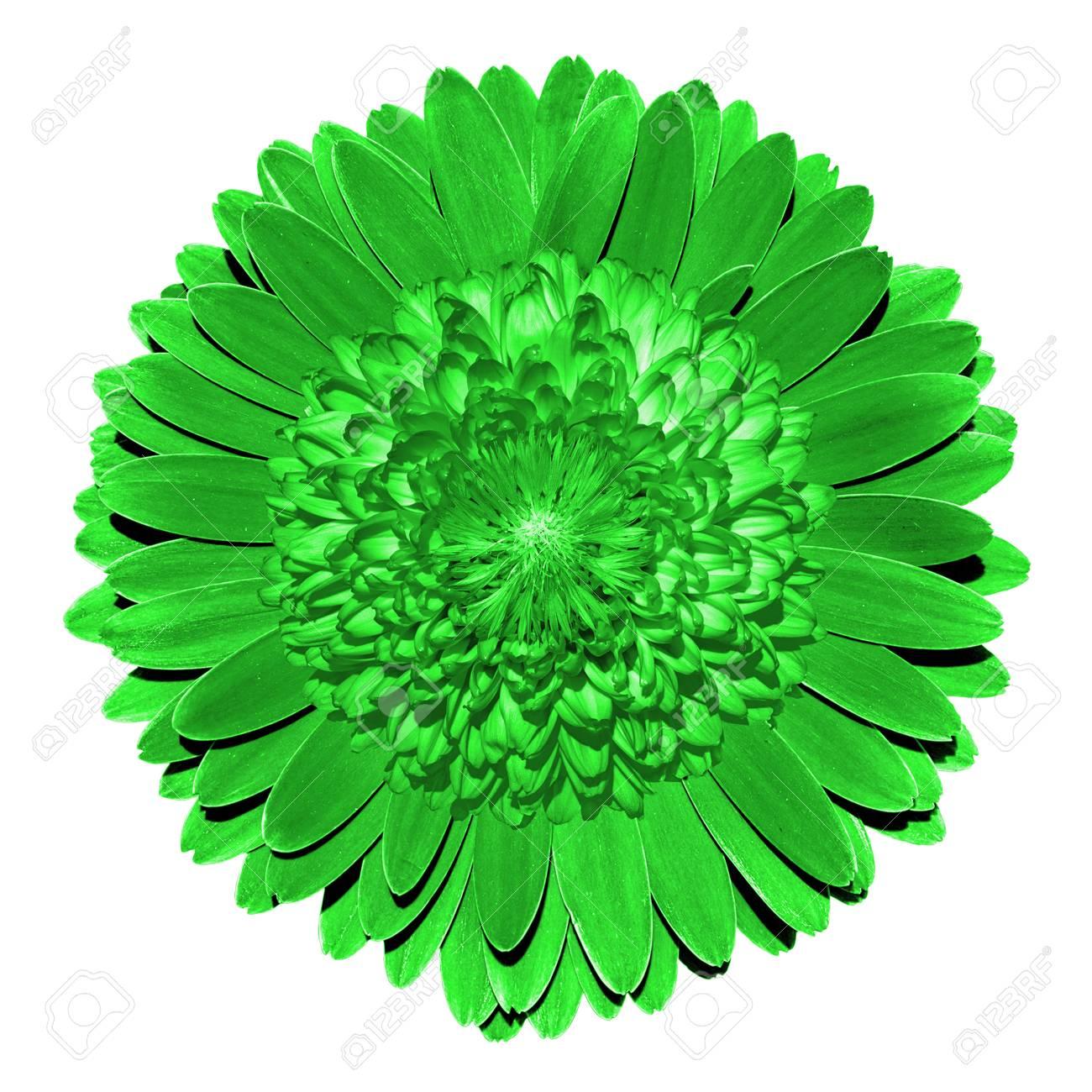 Imaginaire Surrealiste Fleur Verte Macro Isole Sur Blanc Banque D