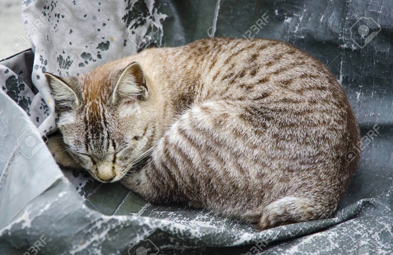 Cute Kitten Sleeping e Side Stock Picture And Royalty