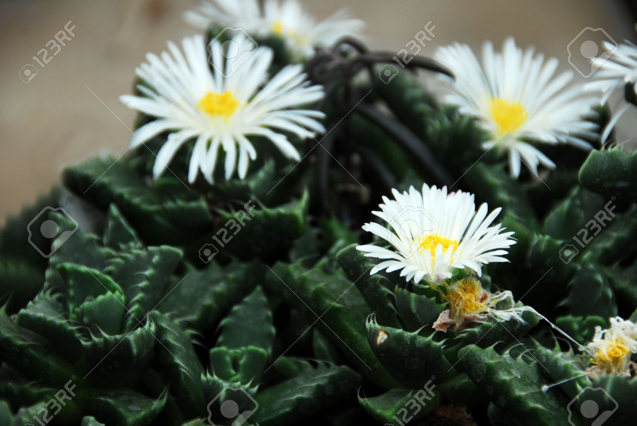 Whites flowers calgary image collections flower decoration ideas fantastic whites flowers calgary vignette images for wedding gown exelent whites flowers calgary crest wedding and mightylinksfo