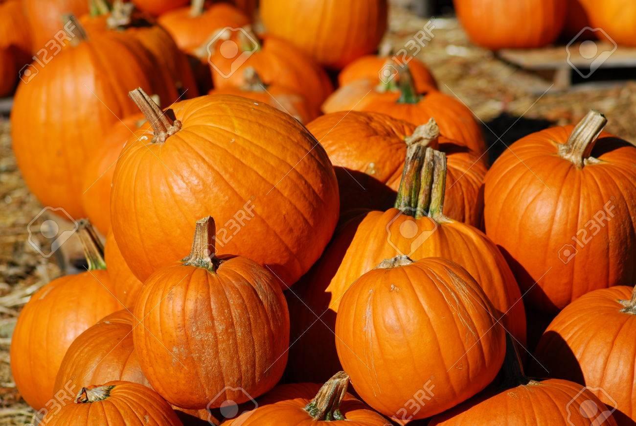 Zucca Frutta Per La Cucina E La Decorazione Di Halloween Foto ...