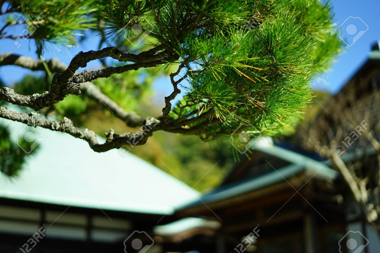 https://previews.123rf.com/images/boysintown/boysintown1711/boysintown171100155/90796957-matsu-temple.jpg