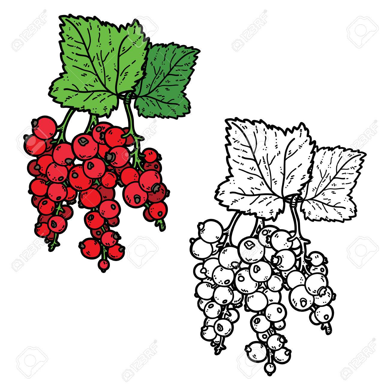 Cute Currant. Vector Cute Hand Drawn Currant And Leaf For Coloring ...
