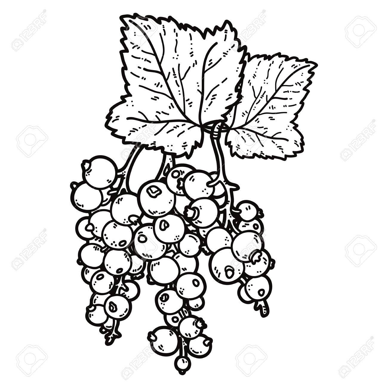 Cute Currant. Vector Cute Hand Drawn Currant And Leaf Outlines ...