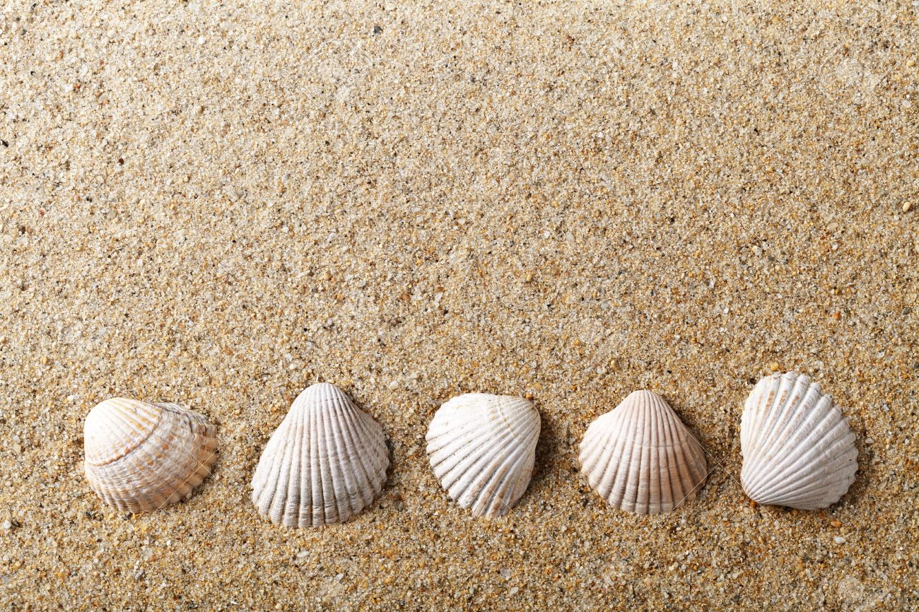 Sea shells on sand Holiday beach background