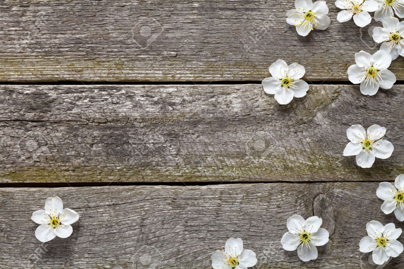 Spring flowers on wooden table cherry blossom top view stock photo spring flowers on wooden table cherry blossom top view stock photo 19584862 mightylinksfo