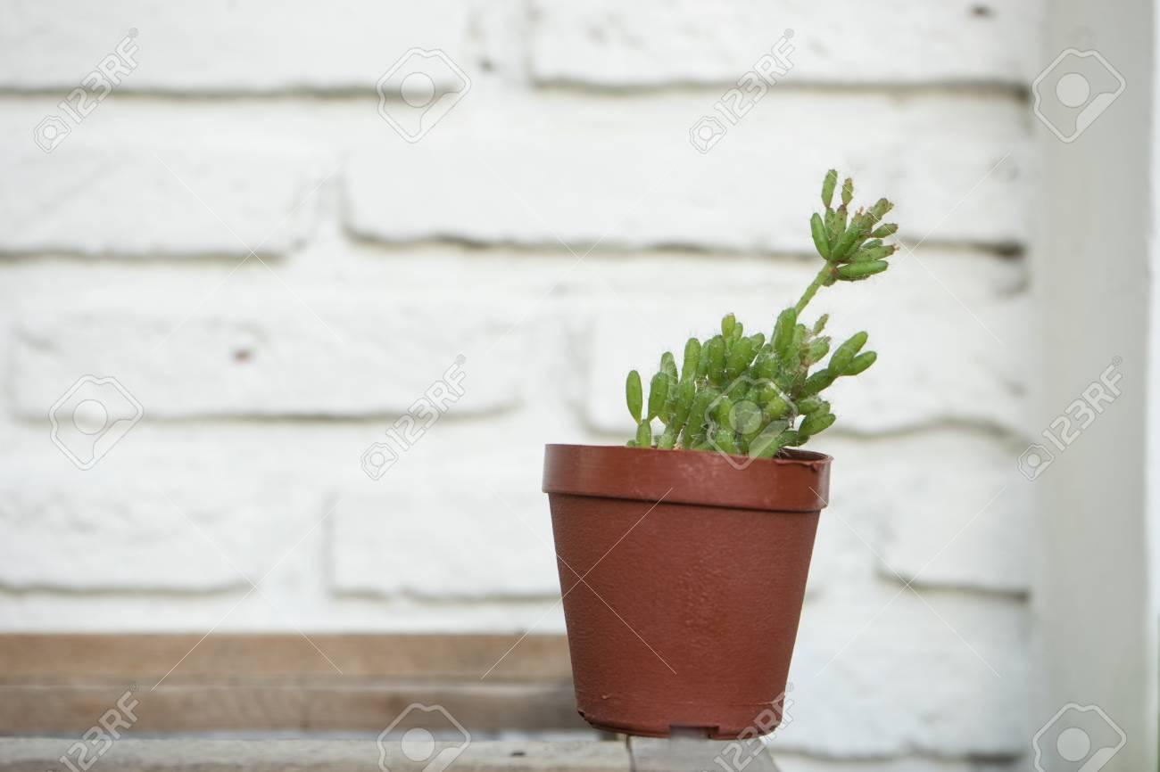 kleine kaktus in braun blumentopf auf weiße wand hintergrund