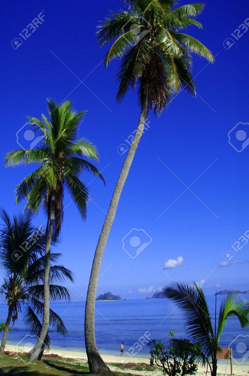 Long reaching palm trees surrounded by beautiful tropical setting with subjet strolling along the waters edge. Stock Photo - 5184673