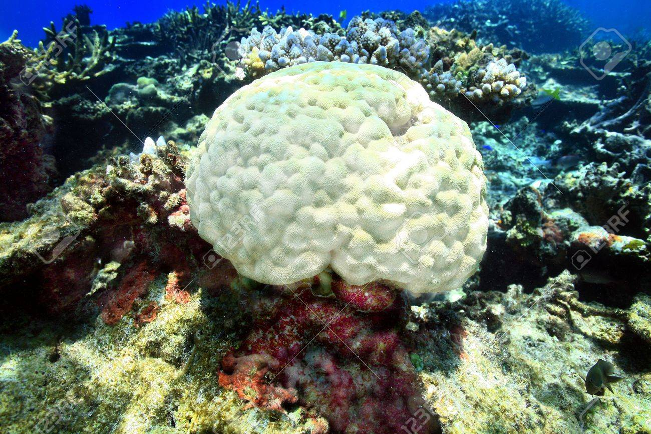 Coral head resting on the shallow reef of Fiji. Stock Photo - 5226981