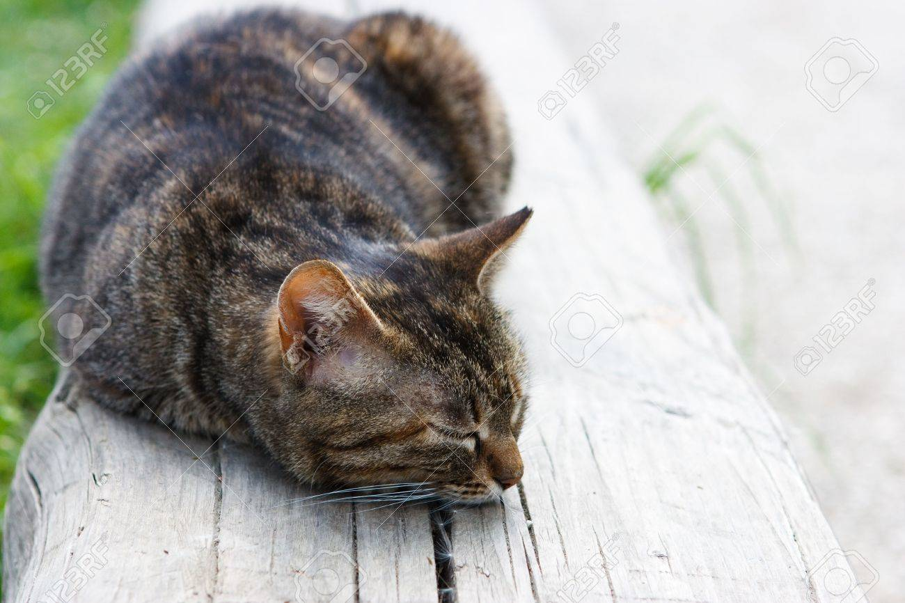Sensational A Cute Cat Sleeping On A Wooden Bench In Plain Sunlight Gmtry Best Dining Table And Chair Ideas Images Gmtryco