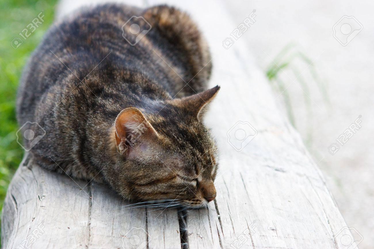 Strange A Cute Cat Sleeping On A Wooden Bench In Plain Sunlight Uwap Interior Chair Design Uwaporg