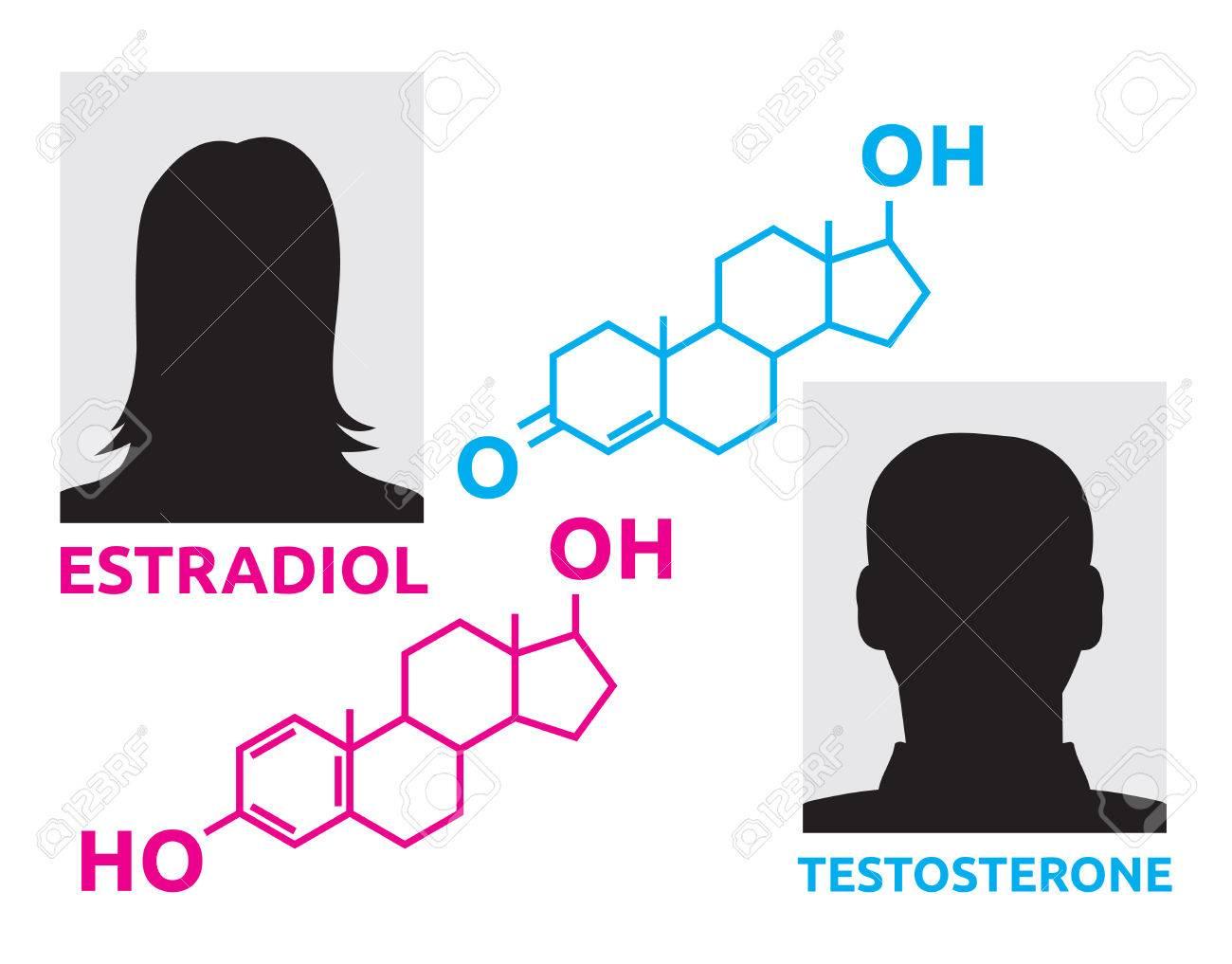 Hormones - estradiol and testosterone - 77751036