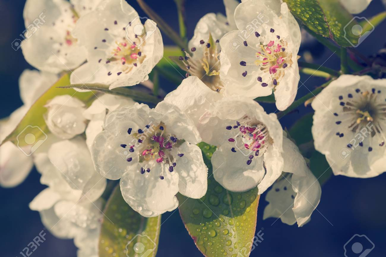 Delicate White Flowers On A Dark Background Note Shallow Depth