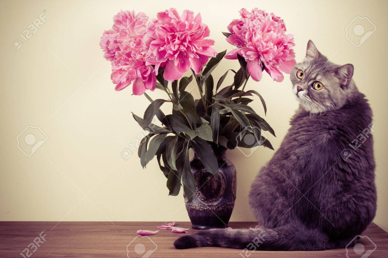 Cat And Flowers Bouquet In Vase On Wooden Table Stock Photo, Picture ...