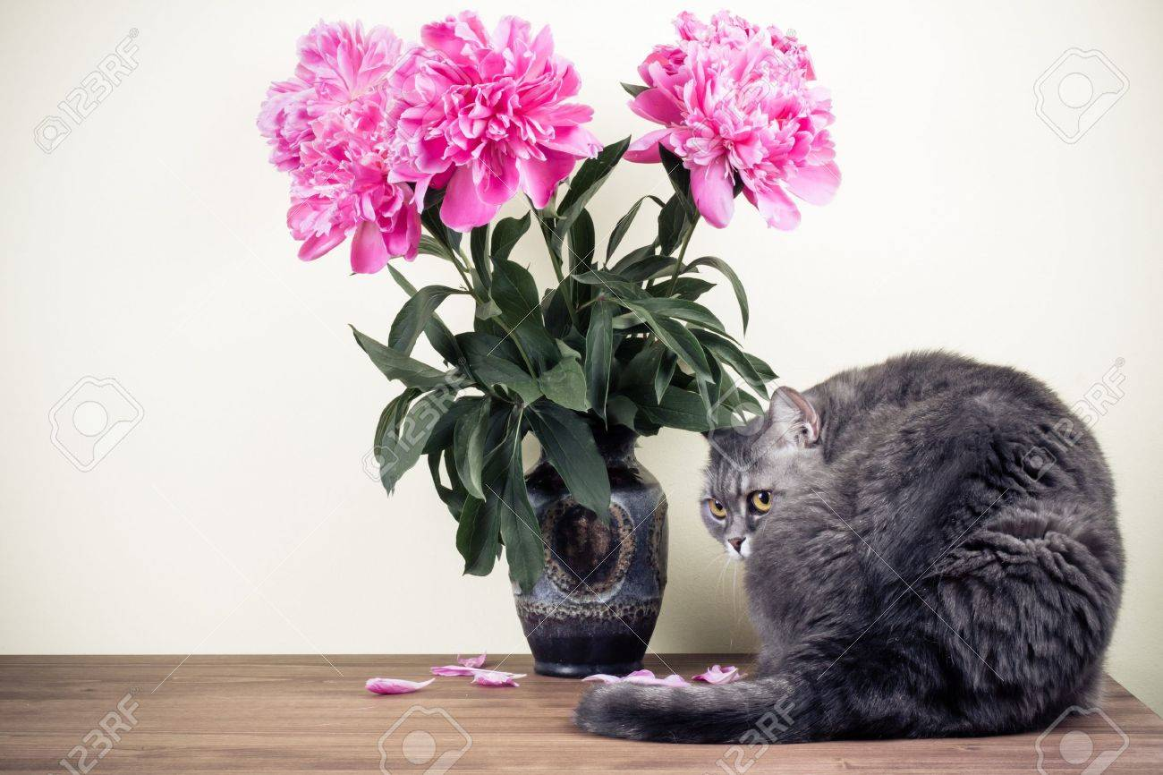 Cat and flowers bouquet in vase on wooden table Stock Photo - 20151782