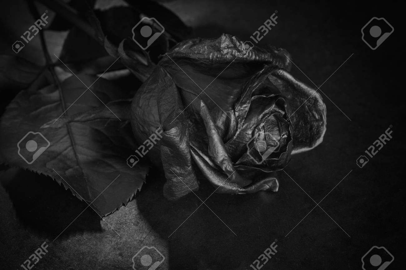 Black rose concept symbol of sorrow melancholy and sad mood depression