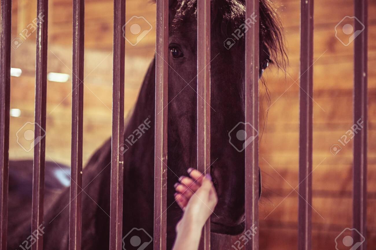 Horse stable farm ranch animal barn head, stall equine. - 137997055