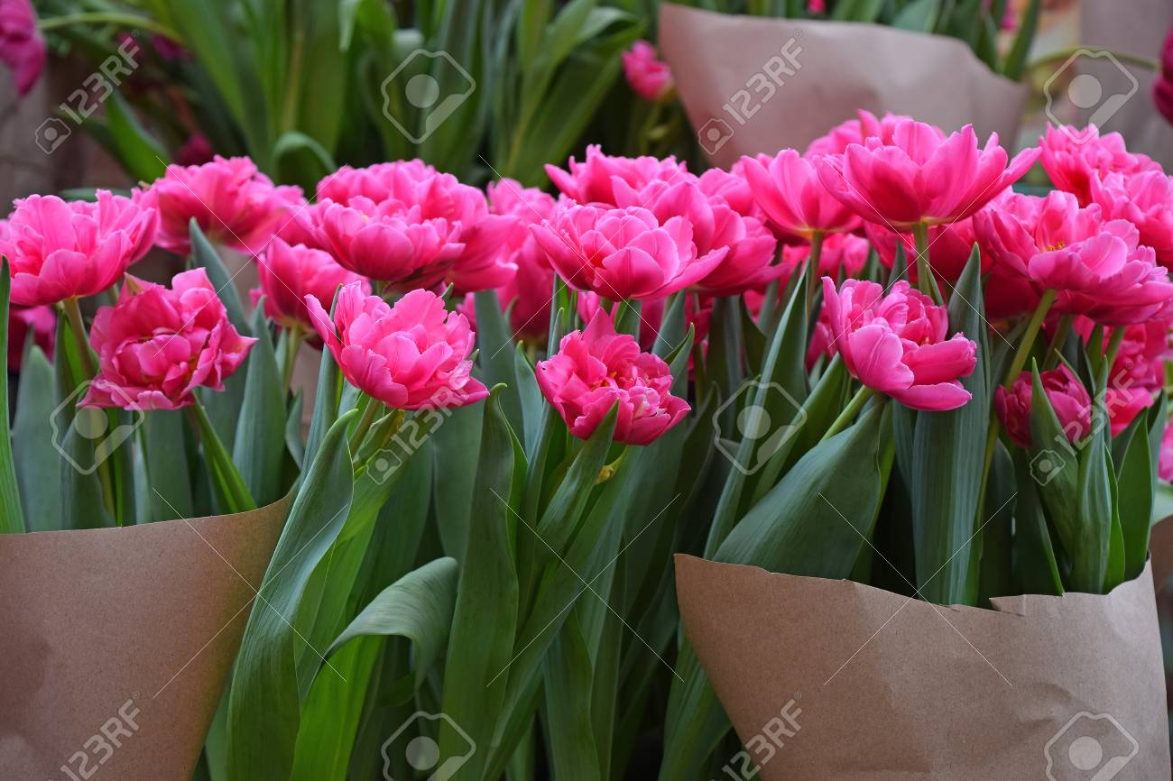 Close Up Tulip Flowers Wrapped With Brown Kraft Paper For Sale