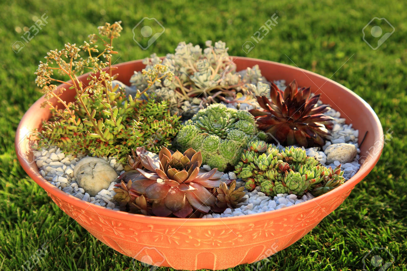 Beautiful Rock Garden Cultivated In Small Basin Or Roof Gardening Stock  Photo   7560285