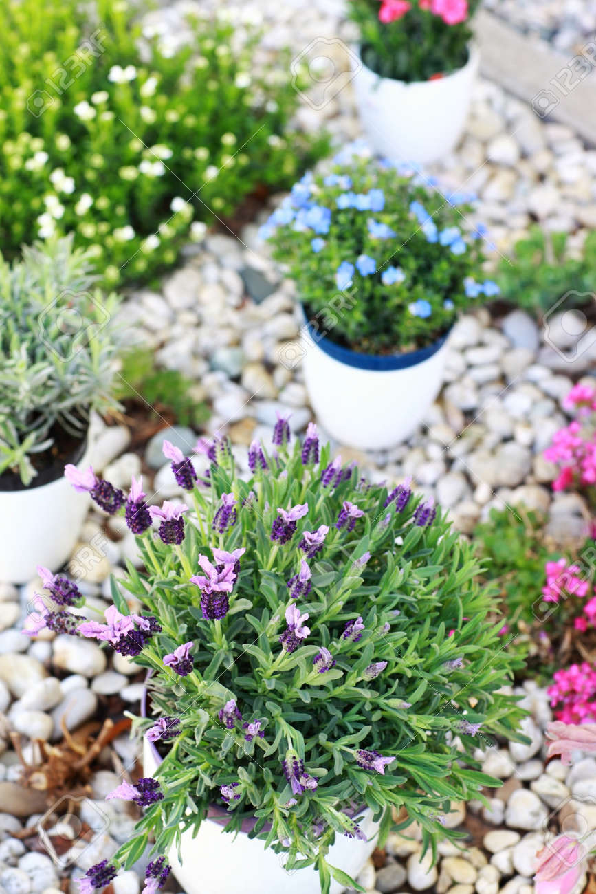 Small Rock Garden Constructed With Rocks And Alpine Plants Stock Photo    13012872