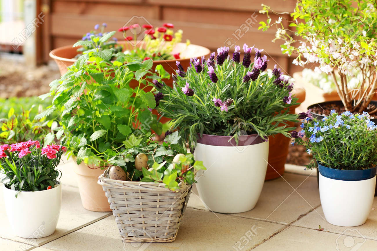 Outdoor flower pots for small garden  patio or terrace Stock Photo    13012875. Outdoor Flower Pots For Small Garden  Patio Or Terrace Stock Photo