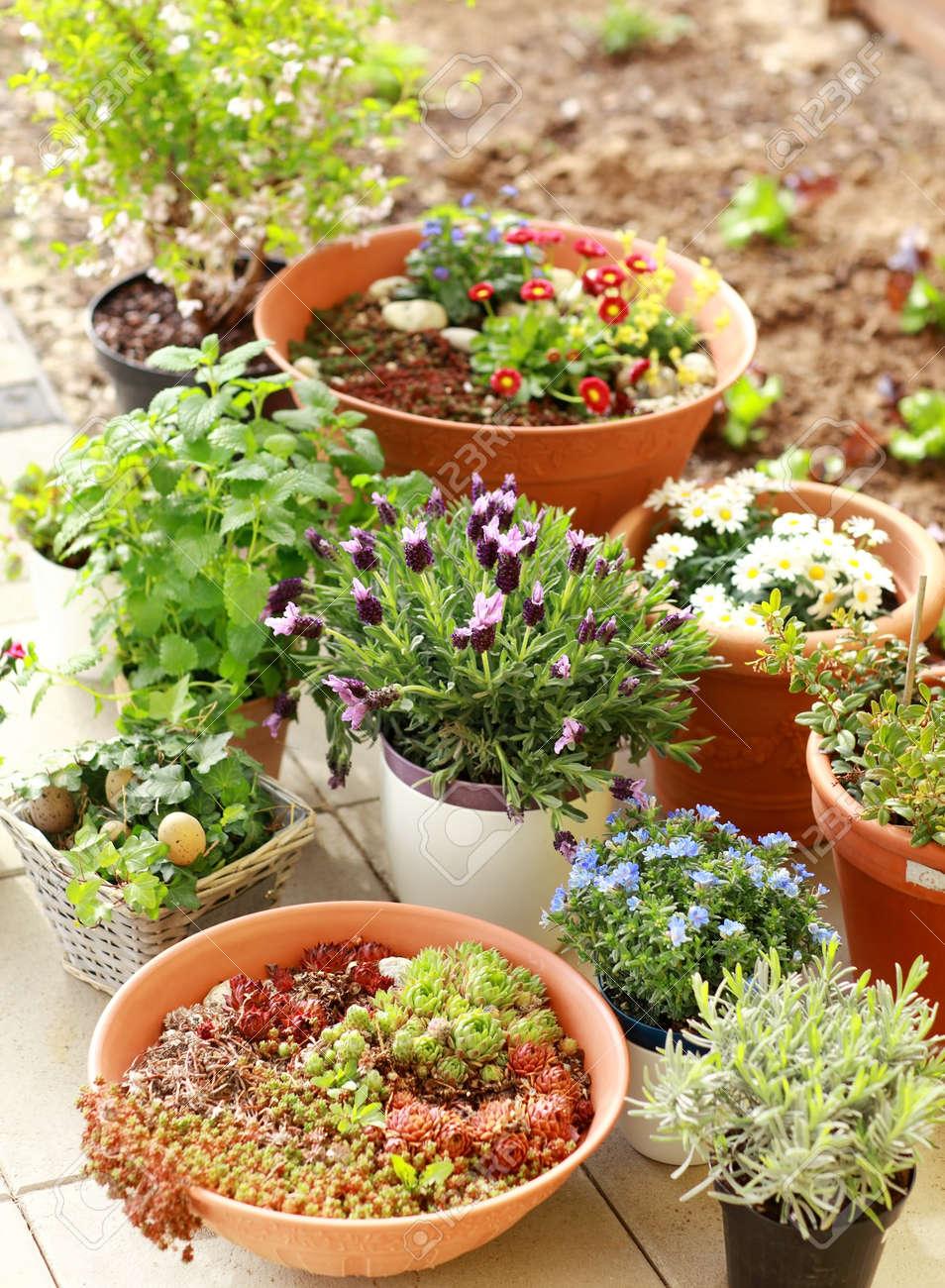 Outdoor flower pots for small garden, patio or terrace Stock Photo - 13012870