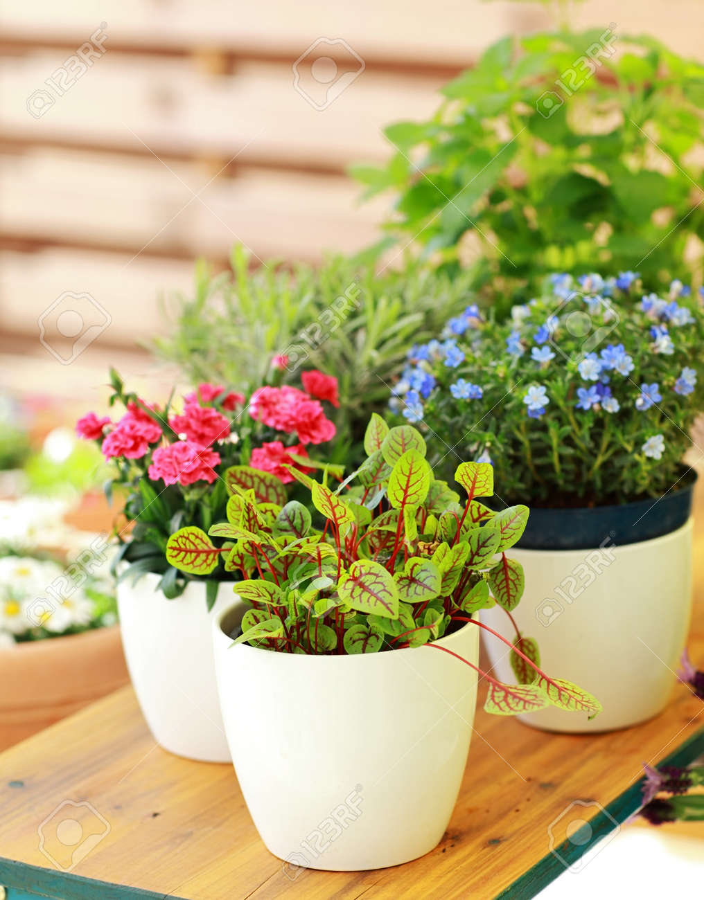 outdoor flower pots for small garden patio or terrace stock photo - Outdoor Flower Pots