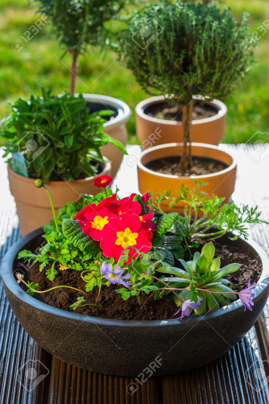 Outdoor Flower Pots With Herbs And Flowers For Small Garden Stock