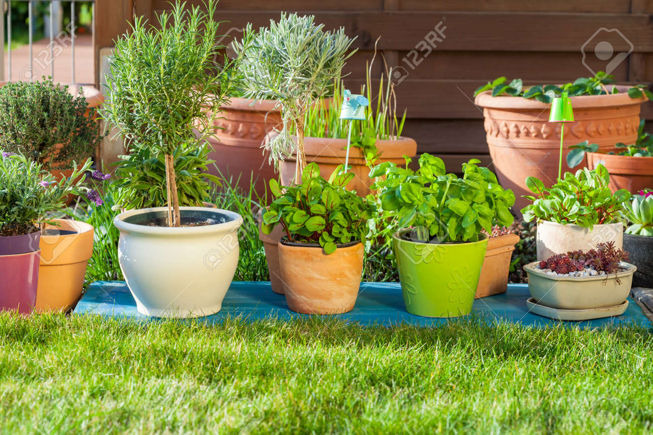 Outdoor flower pots for small garden  patio or terrace Stock Photo    38871777. Outdoor Flower Pots For Small Garden  Patio Or Terrace Stock Photo
