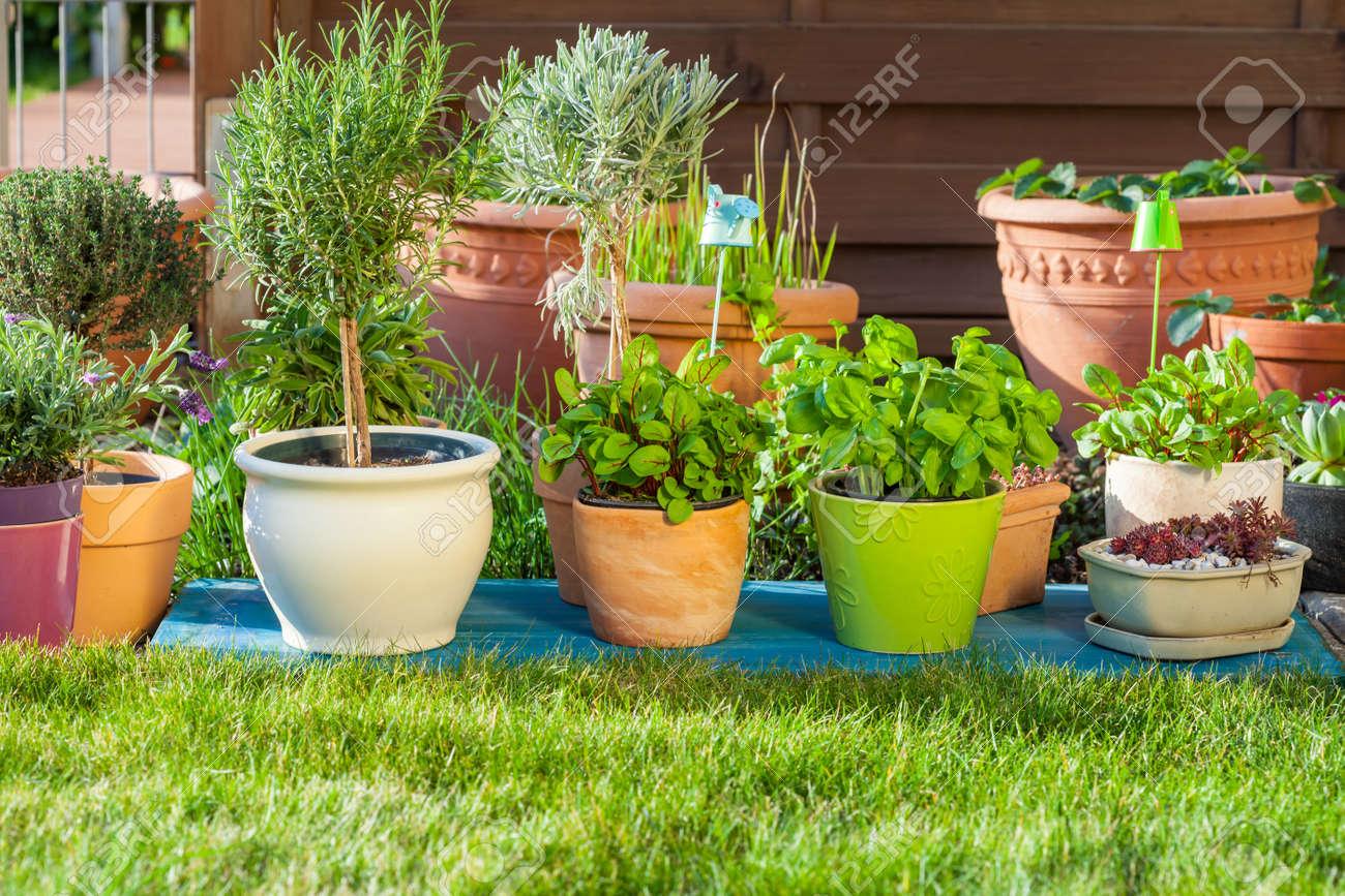 Outdoor flower pots for small garden  patio or terrace Stock Photo    38871777. Outdoor Flower Pots For Small Garden  Patio Or Terrace Stock Photo