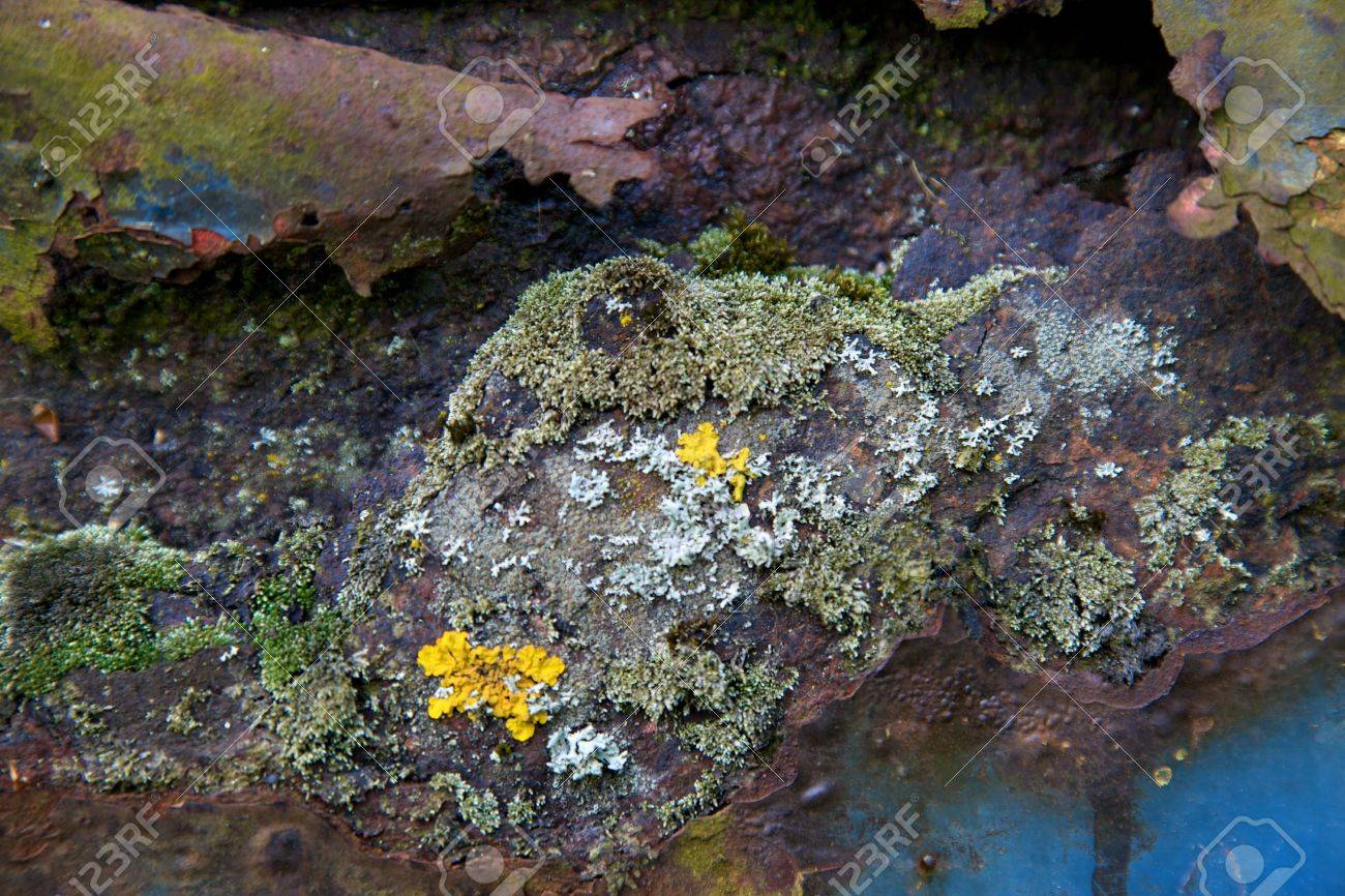 Detail of rusty surface with moss Stock Photo - 5290242