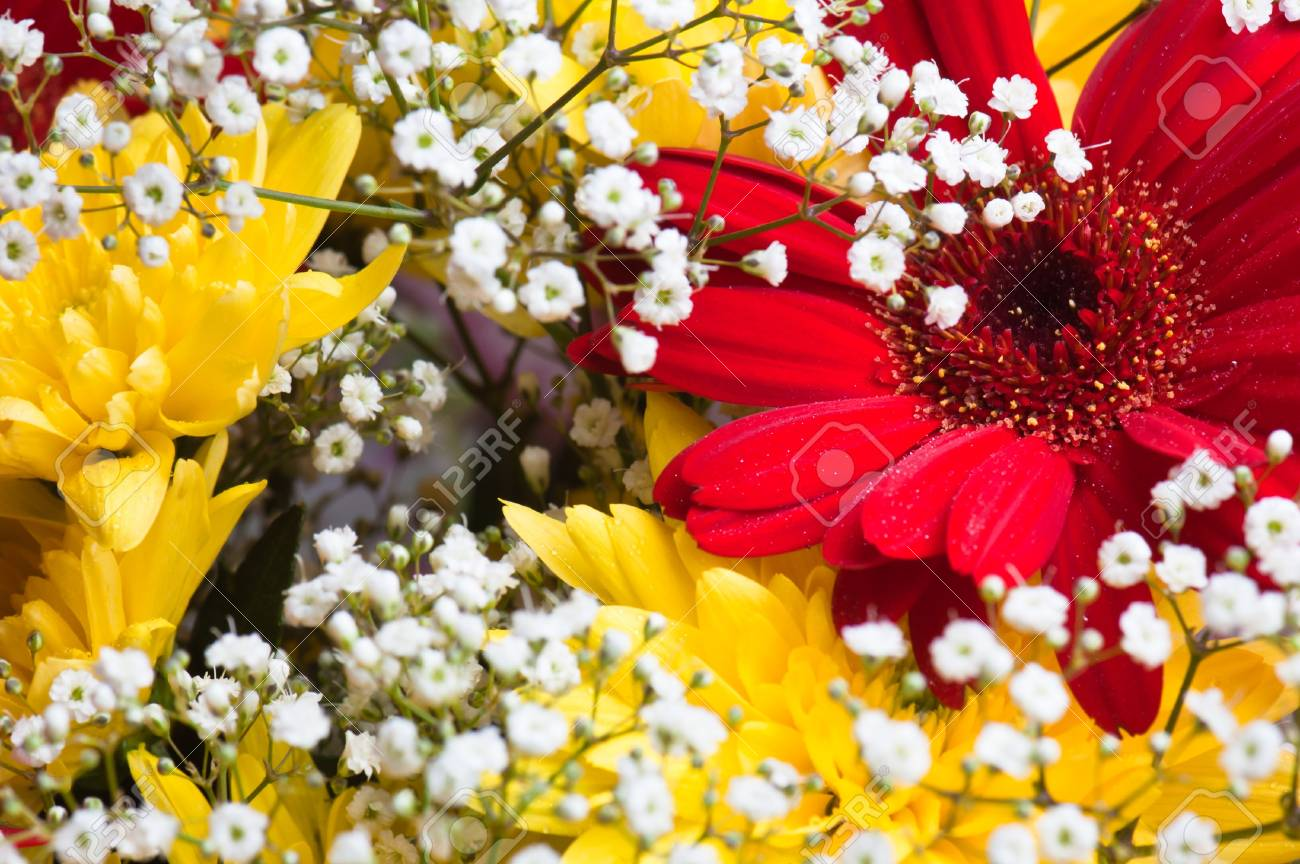 Autumn bouquet of flowers a close up, a background Stock Photo - 8254437