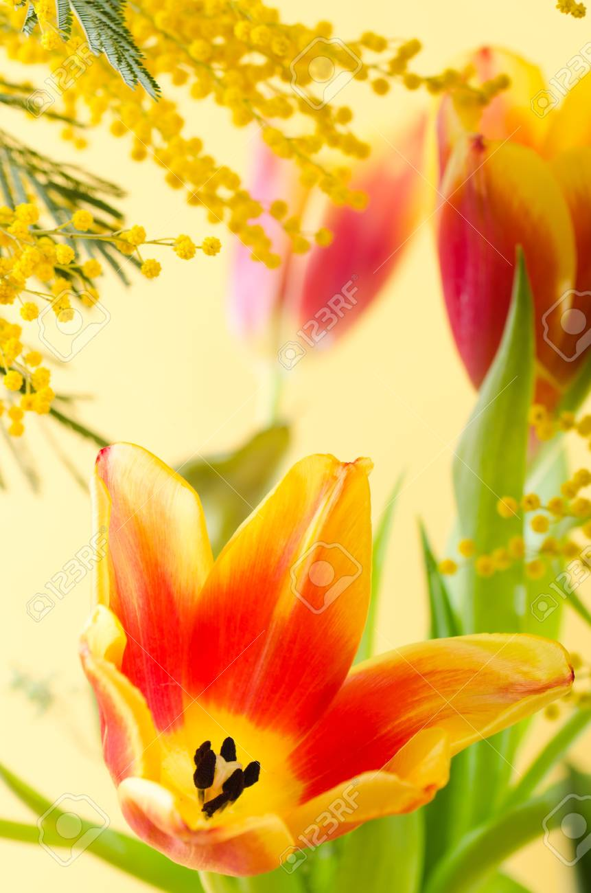 Spring bouquet with a mimosa and tulips Stock Photo - 18386553