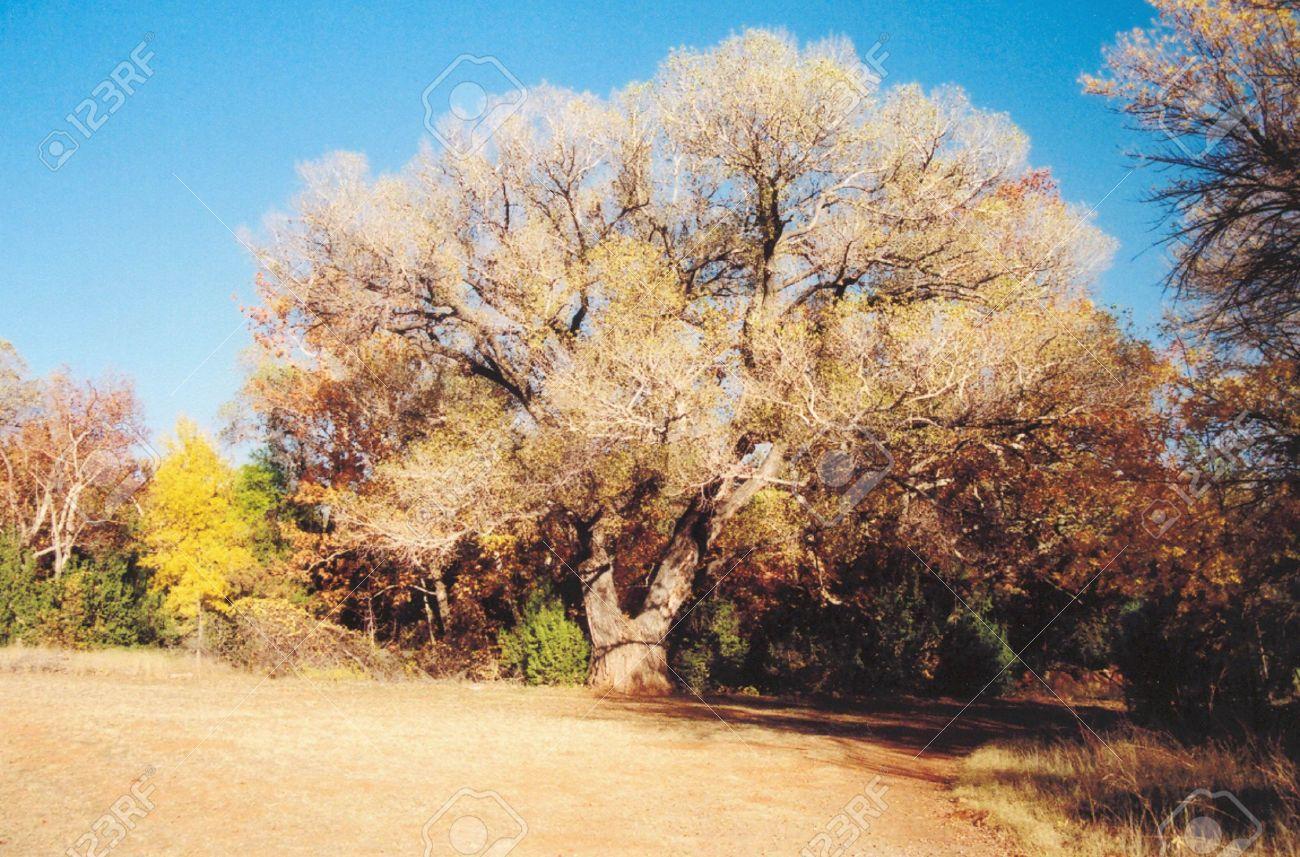 Union Tree Red Rock State Park Sedona Arizona Stock Photo Picture